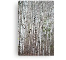 Stark Bark Canvas Print