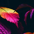 Purple Leaves by cadinera