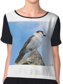 Gray Jay With Blue Sky Background Chiffon Top