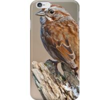 Song Sparrow on a Driftwood Perch iPhone Case/Skin