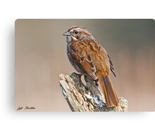 Song Sparrow on a Driftwood Perch Canvas Print
