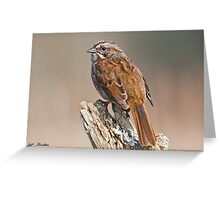 Song Sparrow on a Driftwood Perch Greeting Card