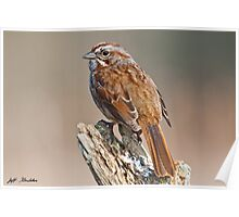 Song Sparrow on a Driftwood Perch Poster