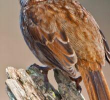 Song Sparrow on a Driftwood Perch Sticker