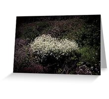 Wildflower Cluster Greeting Card