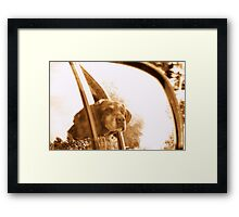 DOUBLE VISION CHOCOLATE LAB Framed Print