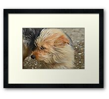 Standing In The Wind Framed Print