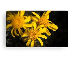 Yellow, yellow, yellow! Canvas Print