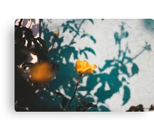 Lonely Rose in Long Beach Canvas Print