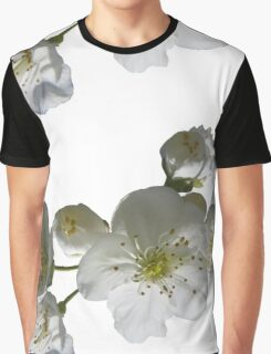 cherries in blosssom on white background Graphic T-Shirt