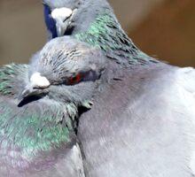 Love Is... Rock Pigeons Sticker