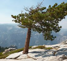 Leaning Tree above Yosemite by MontagnaMagica