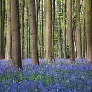 Bluebell wood of Hallerbos by Johannes Valkama