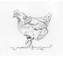 Hen Drawing in One Line Photographic Print