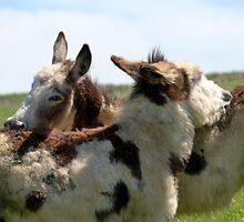 Donkey friends. by sandyprints