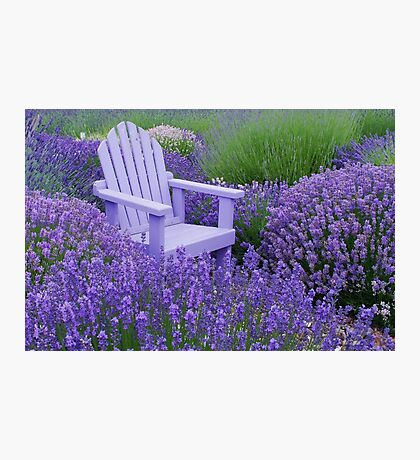 Come and sit among the Lavender Photographic Print