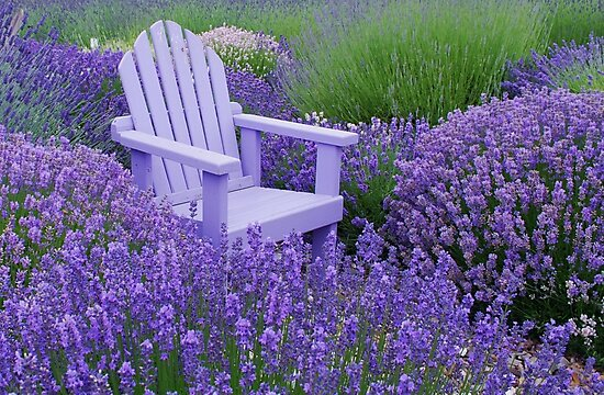 Come and sit among the Lavender by Marjorie Wallace