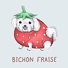 Bichon Fraise by Katie Corrigan