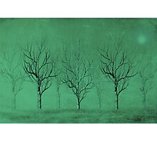 Winter Trees in the Mist Photographic Print