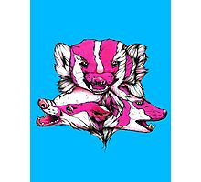 Badgers Photographic Print