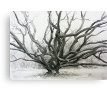 Winter Oak Canvas Print