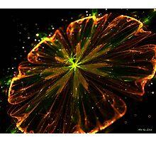 Coopery velvet flower Photographic Print