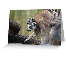 Ring-tailed Lemurs Greeting Card