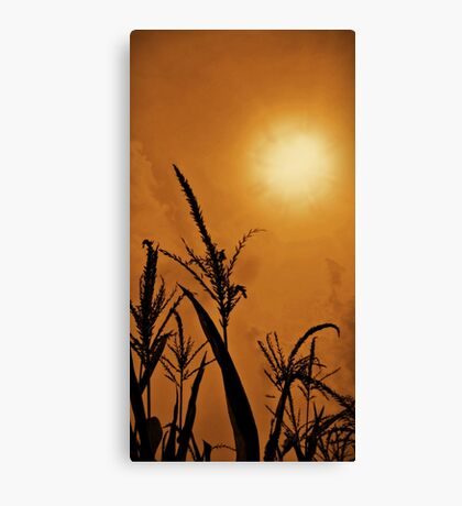 Corn Field Haze  Canvas Print