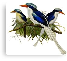 TIR-Kingfishers - 1 Canvas Print