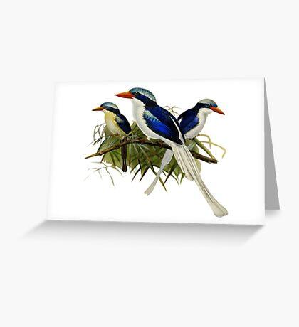 FF - Kingfishers - 1 Greeting Card