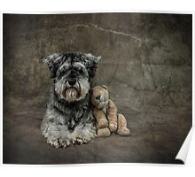 Miniature Schnauzer With Toy Poster