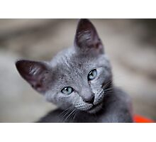 Cute little kitten Photographic Print