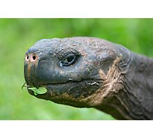 Giant Galapagos land turtle Photographic Print