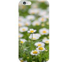 Field of daisy flowers iPhone Case/Skin