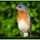 Eastern Bluebird by David Dehner