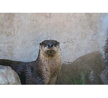 Harry Otter Two Photographic Print