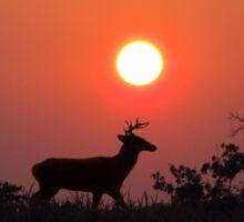 Sunset  Silhouette Sticker