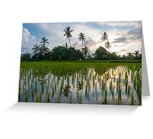 Green rice fields on Bali island, Jatiluwih near Ubud Greeting Card
