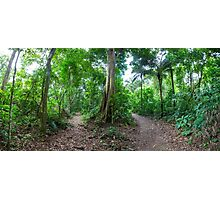 Tropical Rainforest Landscape and trail Photographic Print