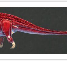 Amargasaurus Muscle Study (No Labels) Sticker