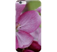 pink apple tree blossoms iPhone Case/Skin