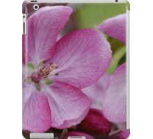 pink apple tree blossoms iPad Case/Skin