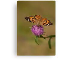 Red Admiral on Wild Clover Canvas Print