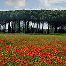 Beautiful Tuscany by Jo-PinX