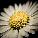 Another Daisy Day by Matt Hurrell