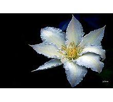 Bluish Clematis Photographic Print