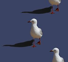 Seagull by STHogan