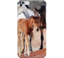 Wild Brumbies of the Mereenie iPhone Case/Skin
