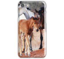 Wild Brumbies of the Mereenie iPhone Case/Skin