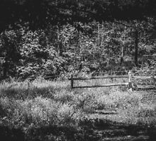 The Lower Pasture in Black and White by MotherNature2